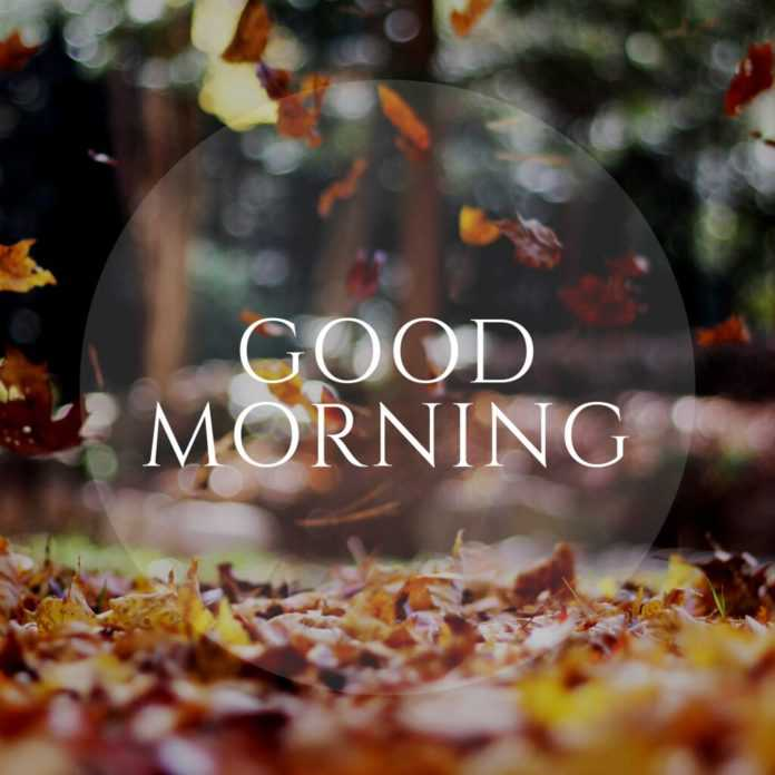 good morning tree leaves images