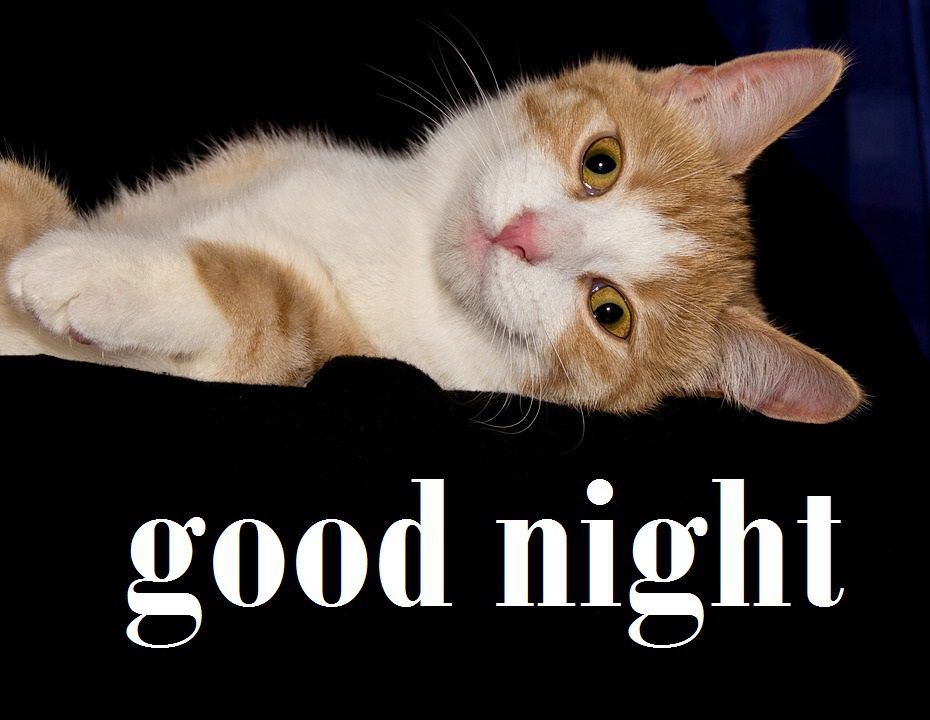 good night cat images