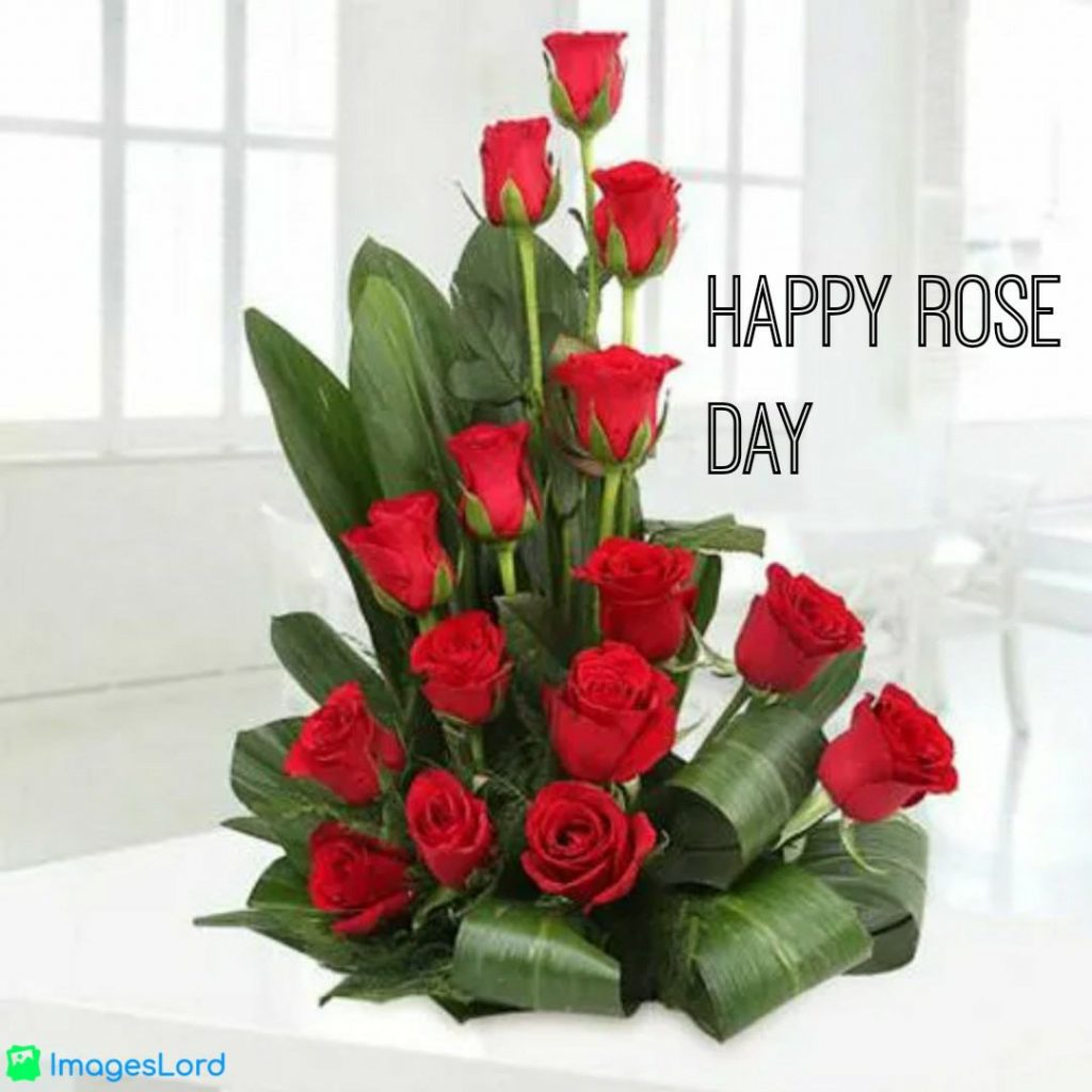 images of rose flowers