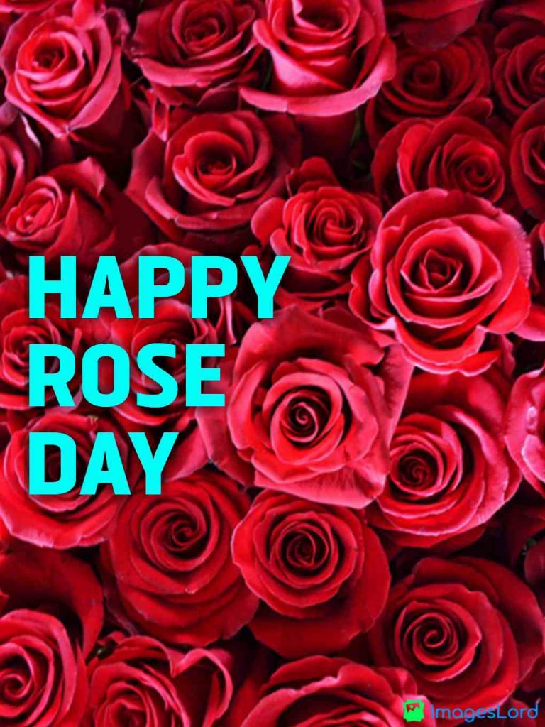 rose day wallpapers hd 2020