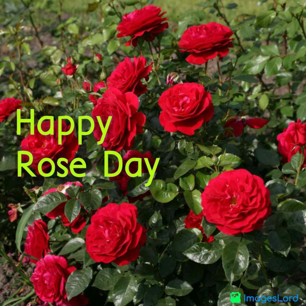rose day 2020 wallpapers